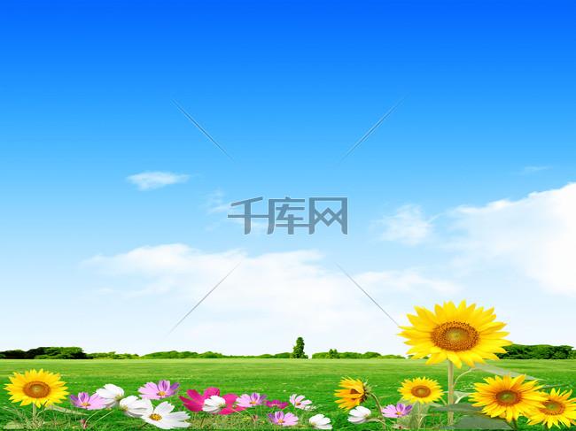 小清新向日葵海报背景