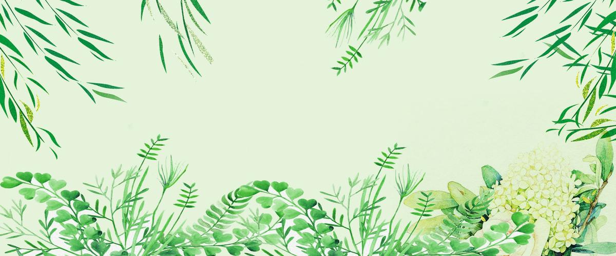 唯美绿植图片手绘大全