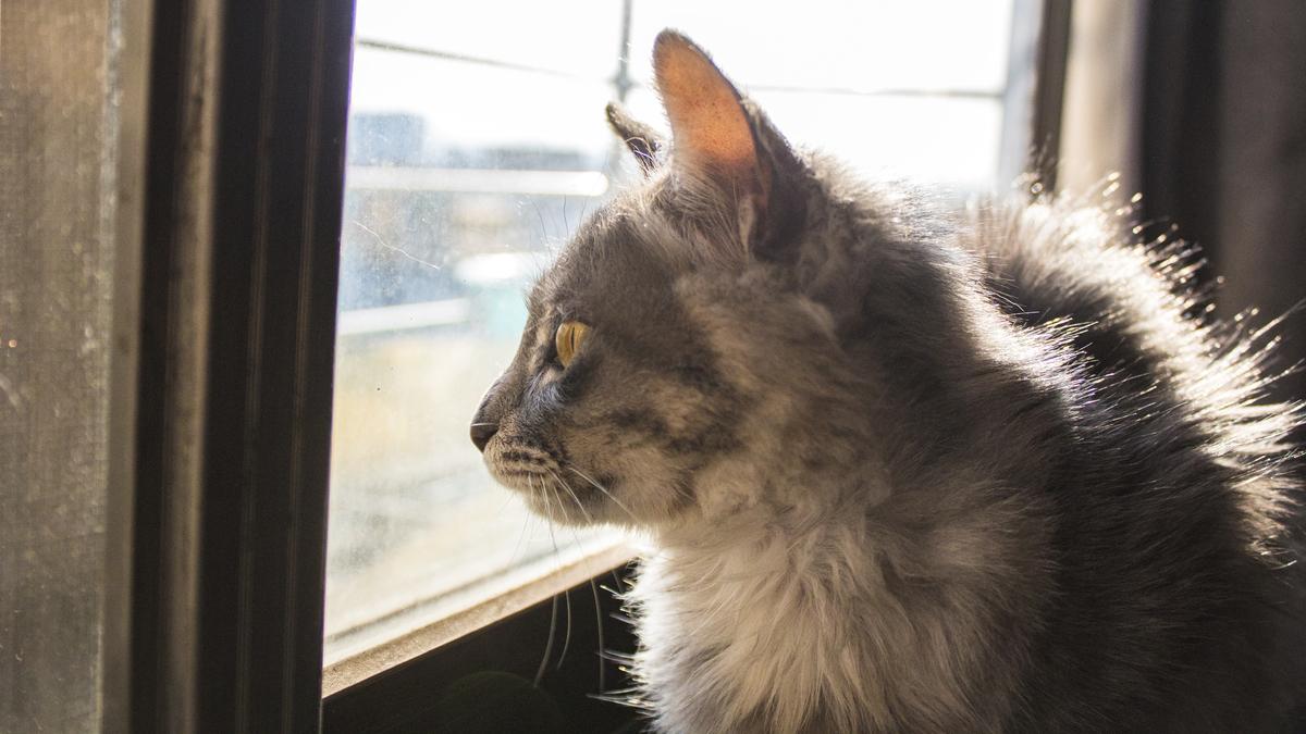 看风景的猫咪商用摄影背景图片免费下载_海报banner