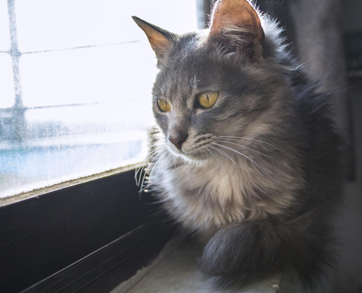 看风景的猫咪商用摄影