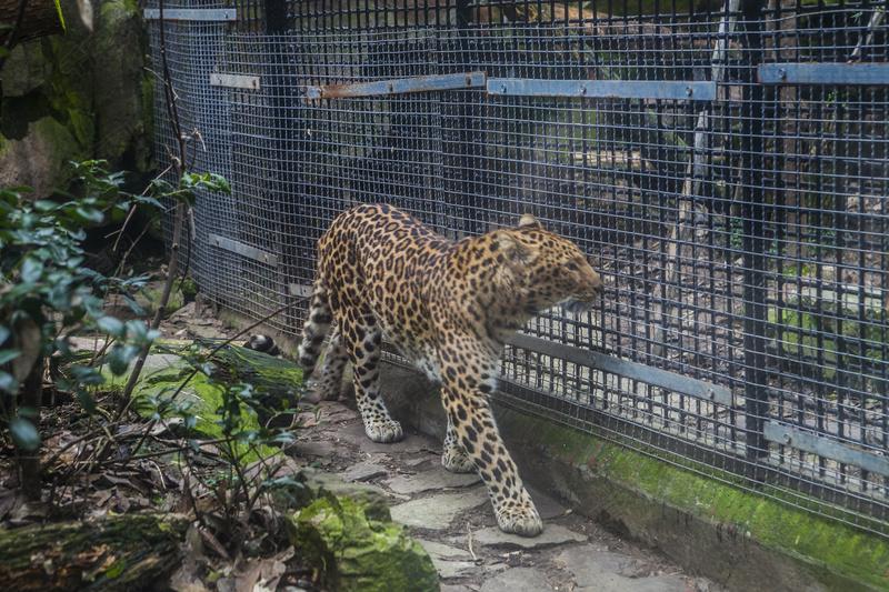 动物园常见动物摄影图10