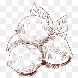 免费下载 线描水果图片大全 千库网png