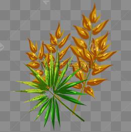 尖形叶子植物图片