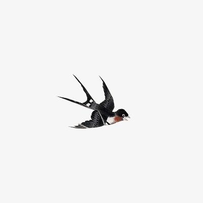手绘燕子图案【高清装饰元素png素材】-90设计
