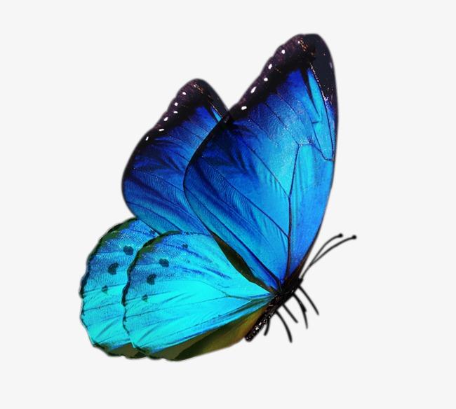 蝴蝶手绘图侧面