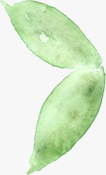 手绘植物花卉手绘手绘花卉飘落牡丹月季花玫瑰花花卉设计唯美花卉水彩花卉水墨花卉花草手绘花草绿色植物