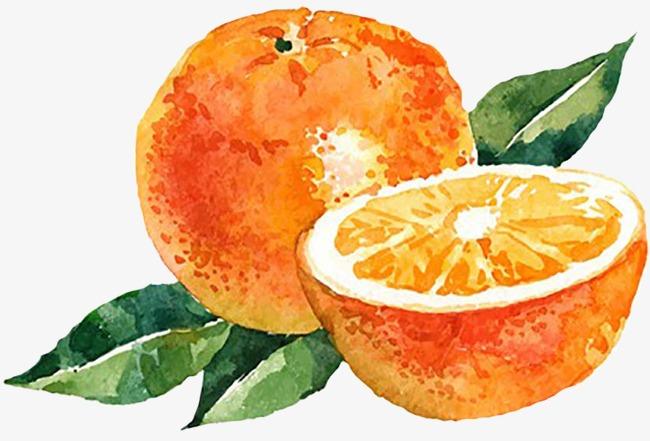 手绘水彩橙子