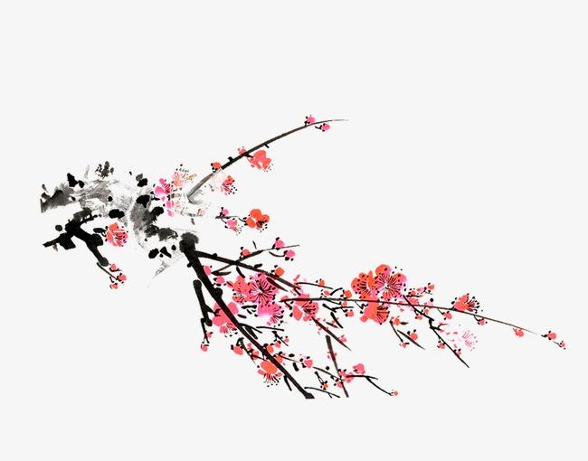 梅花的结构以及名称图