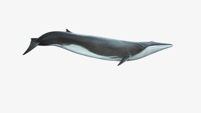 鲸鱼马克笔手绘图