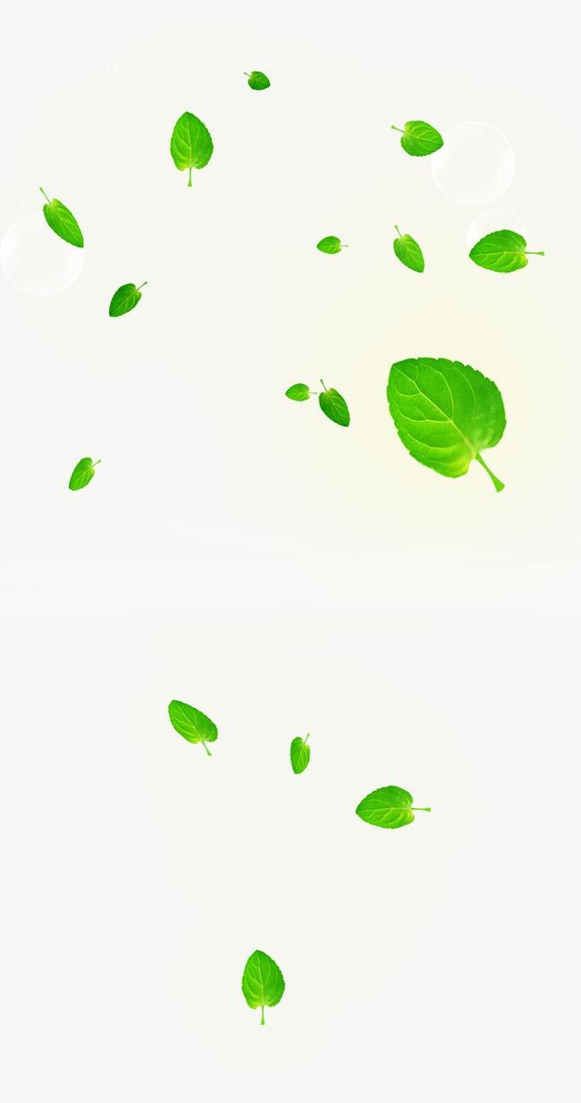 漂浮的绿叶