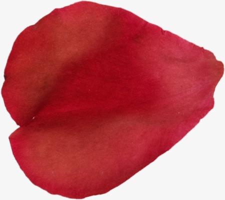 大红的花瓣