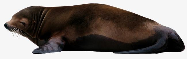动物png图片模板下载(图片编号:14586099)