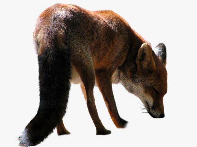 动物png图片模板下载(图片编号:14586101)