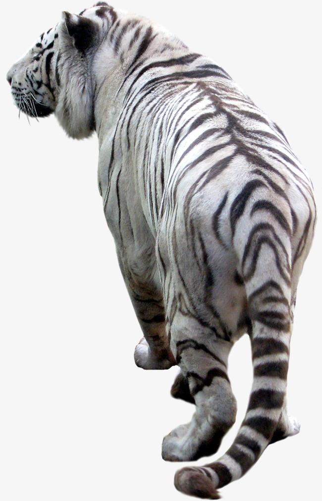 动物png图片模板下载(图片编号:14586104)