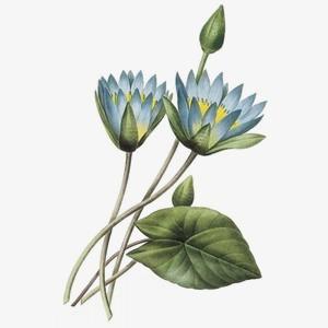 花朵手绘素材 png免抠图