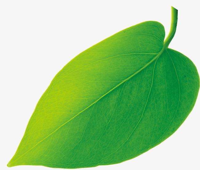 一片树叶素材图片免费下载 高清装饰图案psd 千库网 图片编号14801