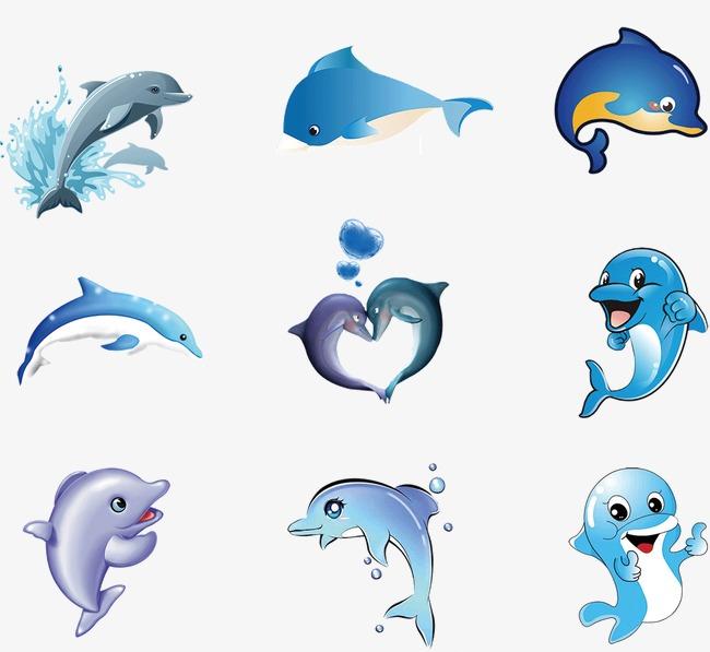 宽吻海豚(3)作为哺乳类动物,海豚有很多特征都与人类相似。不过,由于海豚是在海中生活,与人类的陆上环境不同,出生方式会有少许分别。幼豚出生的时侯是以尾部先出,而人类婴孩则是以头部先出。雌豚一般要怀胎十一个月,才会诞下小海豚。 雌海豚分娩时,先将自己身体弯成拱形,同时奋力向前疾游,并大幅度弯曲尾部,这样持续近一小时,胎儿的尾叶尖才开始显露出来,再两小时,小海豚出生。初生的幼豚重约10公斤,占母亲体重的5%,体长为母亲的45%。当幼豚整个身体从母豚身体钻出来的时候,母豚和其他雌豚便会帮助它到水面呼吸第一口气,
