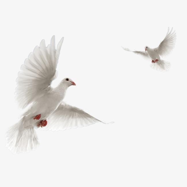 放飞鸽子飞鸽 飞翔的鸽子素材图片免费下载_高清装饰图案png_千库网