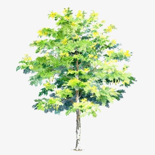 手绘树木图片素材绿色树木 卡通清新小树【高清装饰】