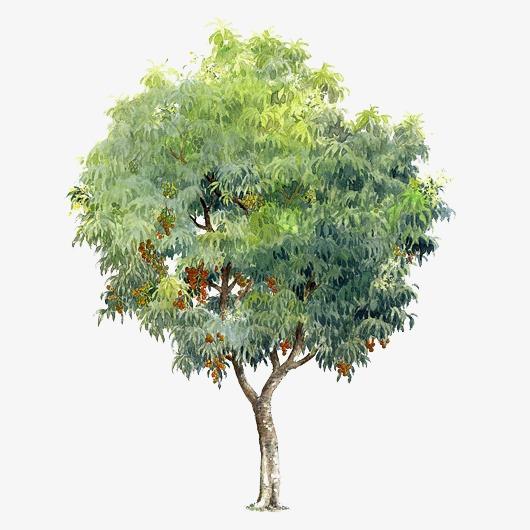 手绘树木元素树木