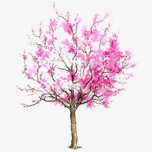Pictures Of Cherry Blossom Trees Cherry Blossom Tree Drawing How To Paint A Cherry Tree In