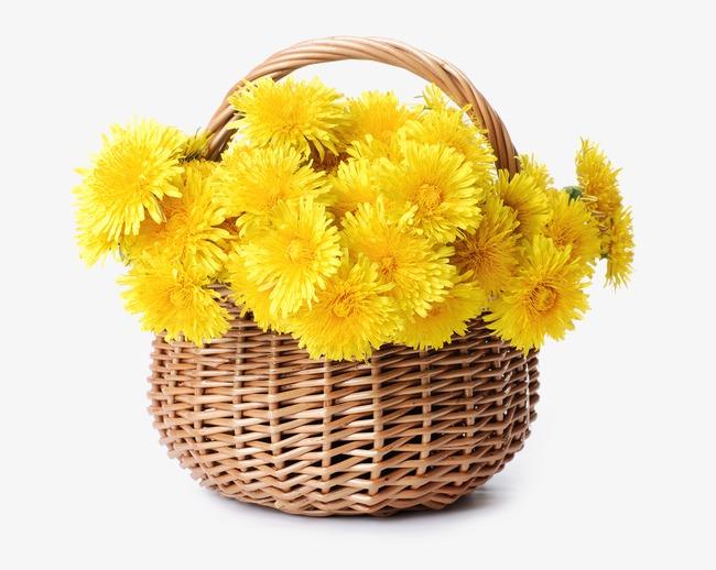 一篮子黄色菊花