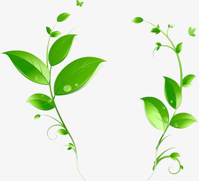 绿色藤曼图片