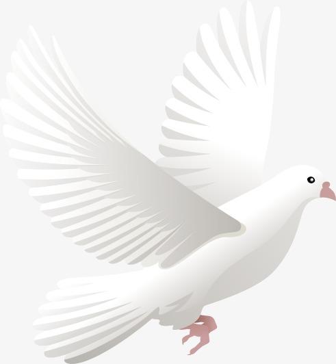 鸽子模板下载(图片编号:14593764)