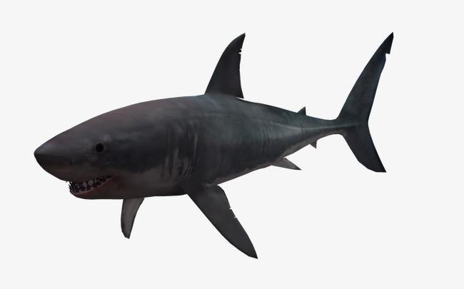 海底动物3d