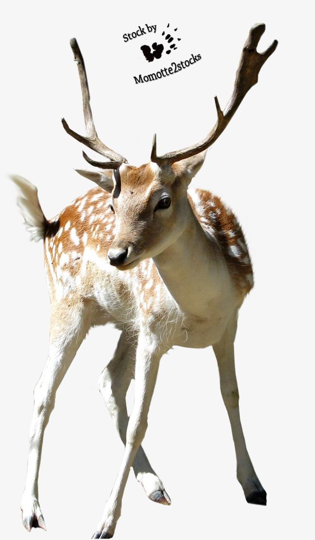 手绘动物图片动物素描 梅花鹿