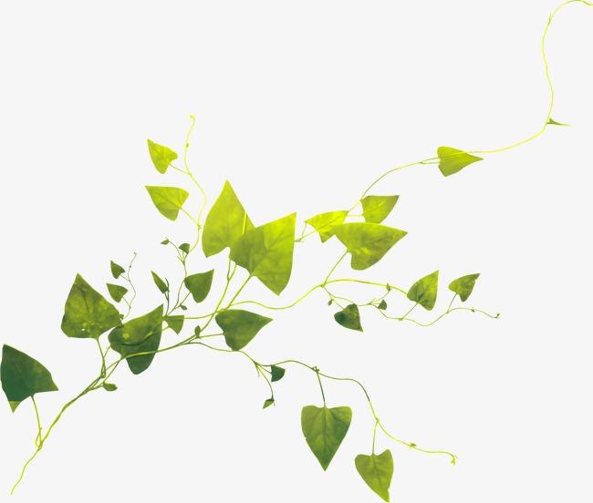 手绘树叶图片素材绿色树叶元素