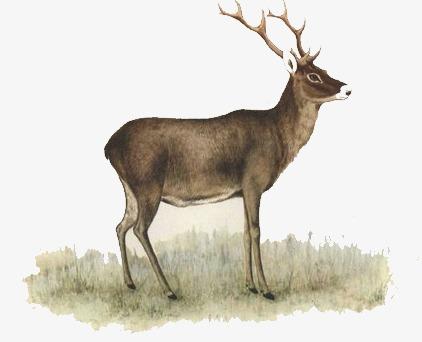 梦幻素材卡通图片 鹿