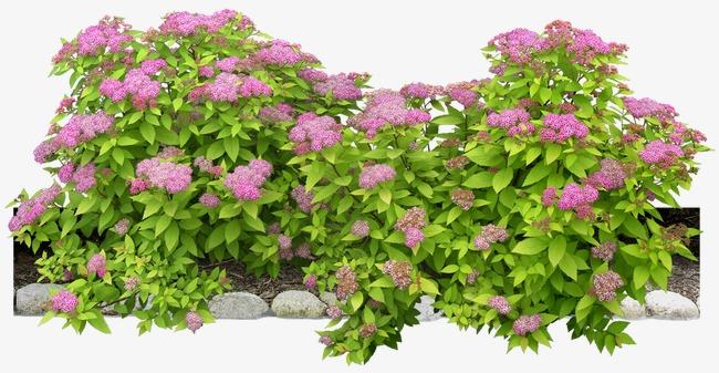 花朵海报背景手绘花朵素材 紫色花束花丛
