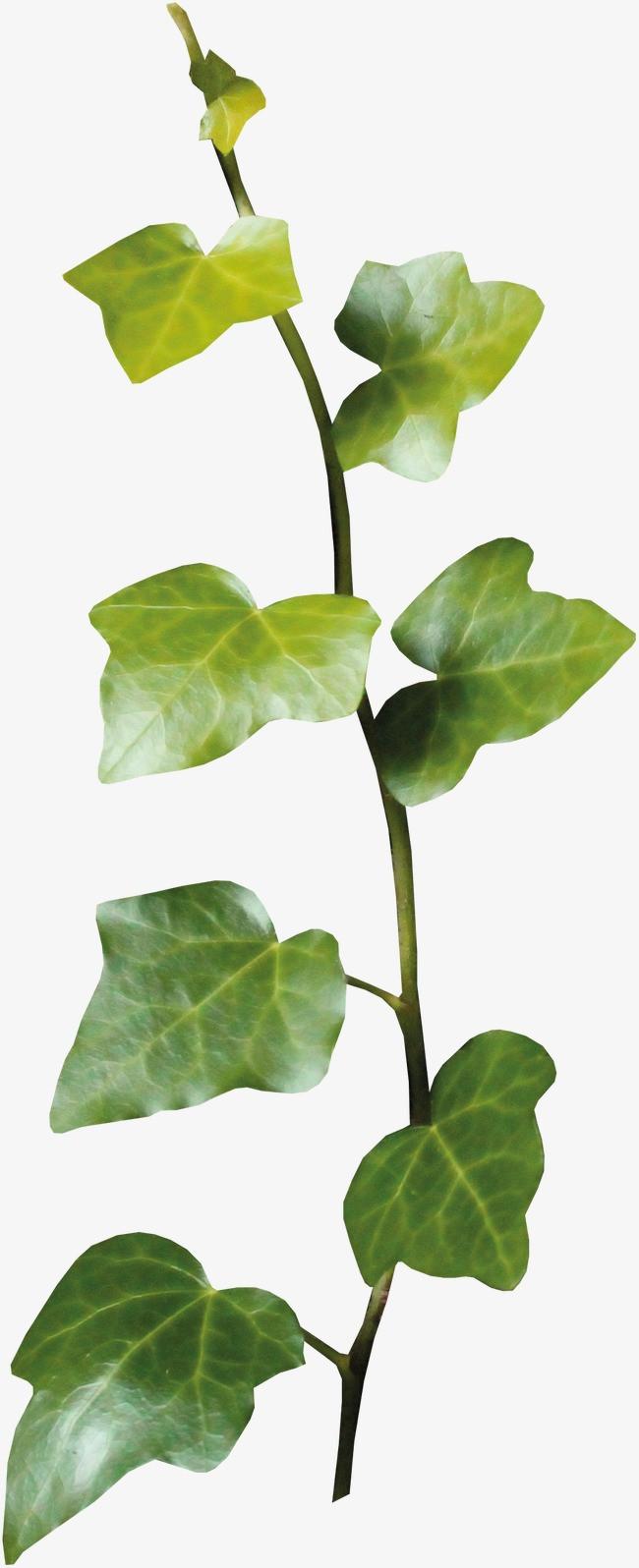 装饰图标手绘小清新素材 清新藤蔓树叶