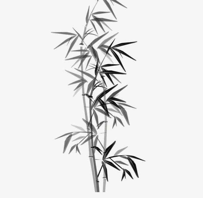 竹子图片素材 竹叶图标 素描 手绘竹叶素材 翠竹 竹叶卡通 水墨 竹子图片