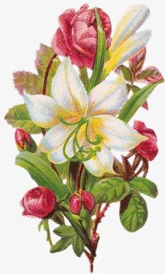 手绘花图片素描 唯美花束花枝