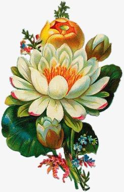 手绘花素材森林系元素 唯美花束花枝