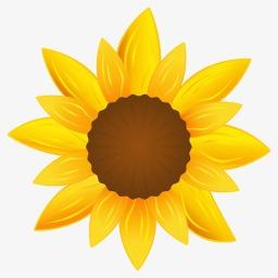 向日葵的图标