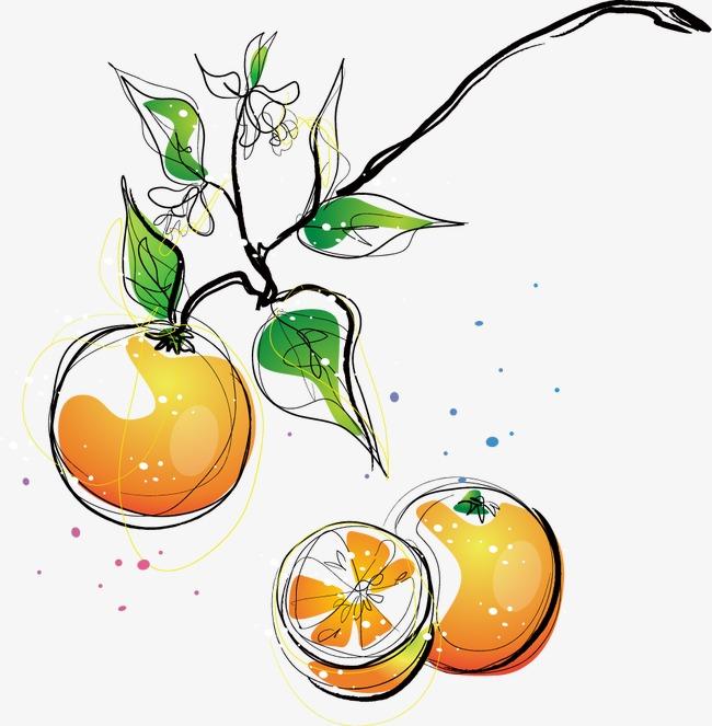 卡通手绘橙子