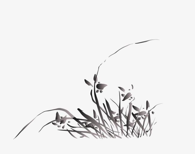 兰花素描图片手绘