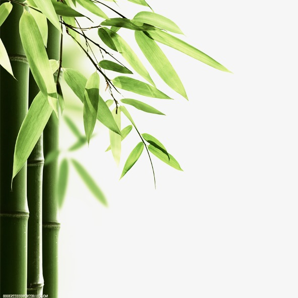 大自然竹叶图片