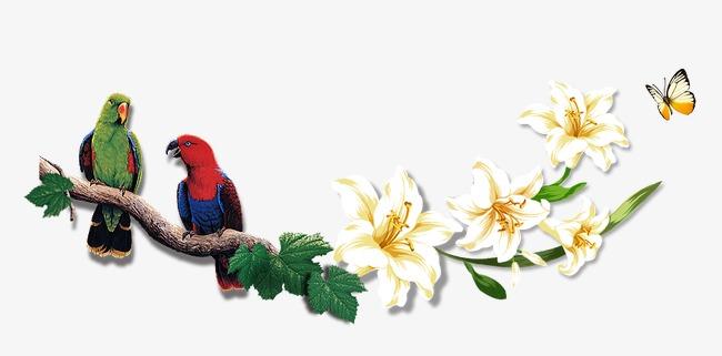 唯美精美树枝鸟花朵鹦鹉树叶图片