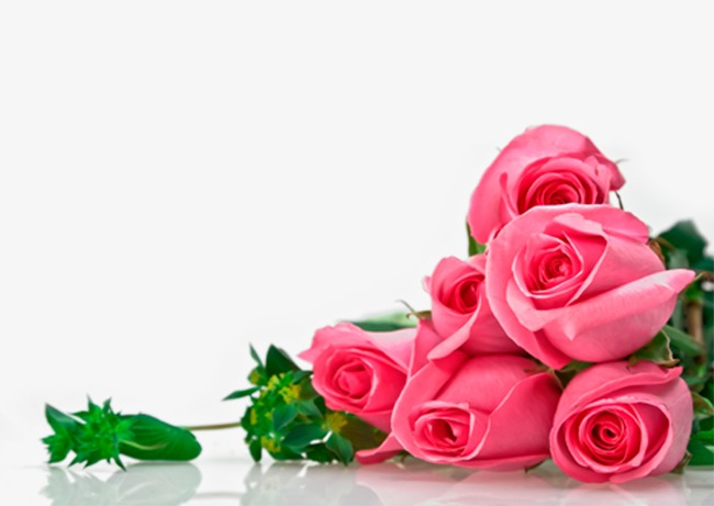 效果元素 玫瑰花