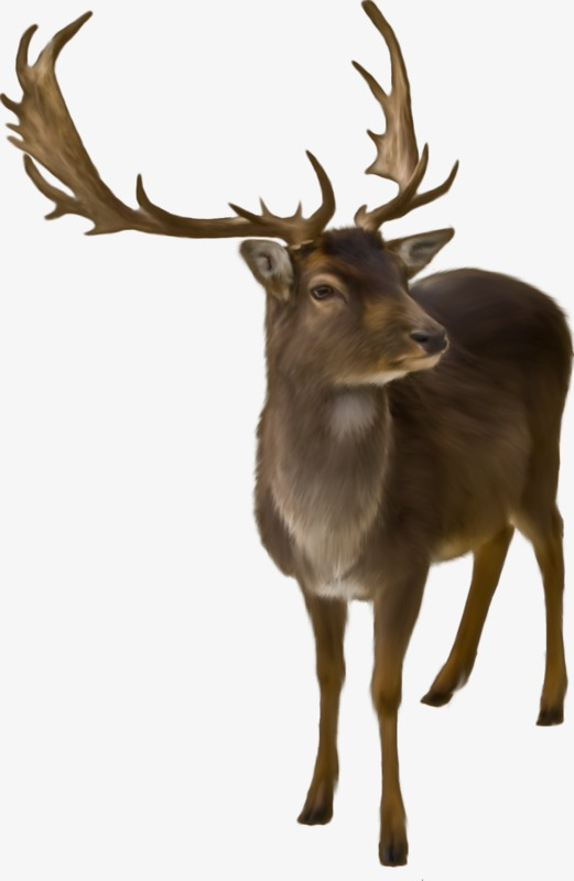 长颈鹿梅花鹿森林动物【高清装饰元素png素材】-90设计
