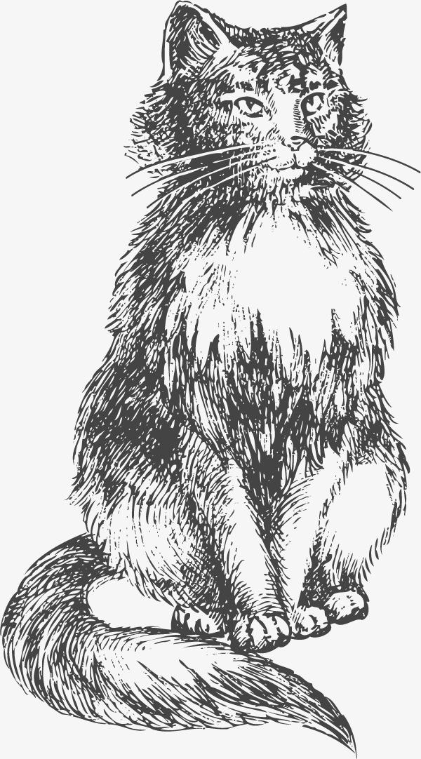 猫咪 猫猫 钢笔画铅笔画 手绘 动物 宠物             此素材是90