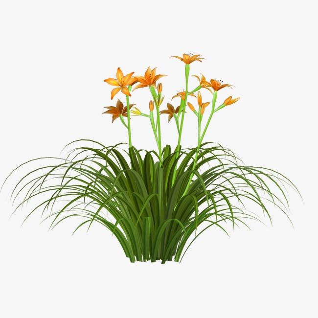 绿植花草手绘装饰图片