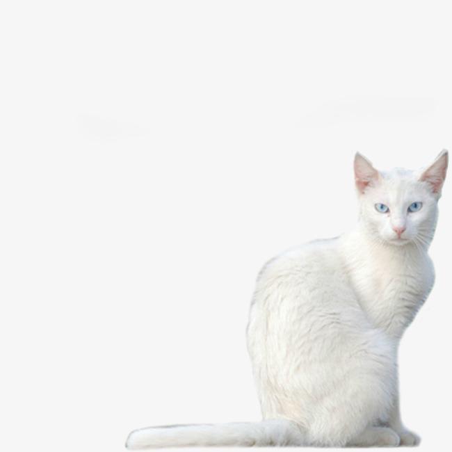 壁纸 动物 猫 猫咪 小猫 桌面 650_650