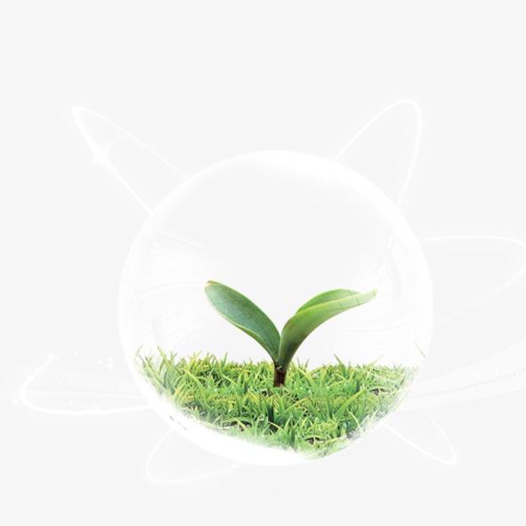 小草发芽图片