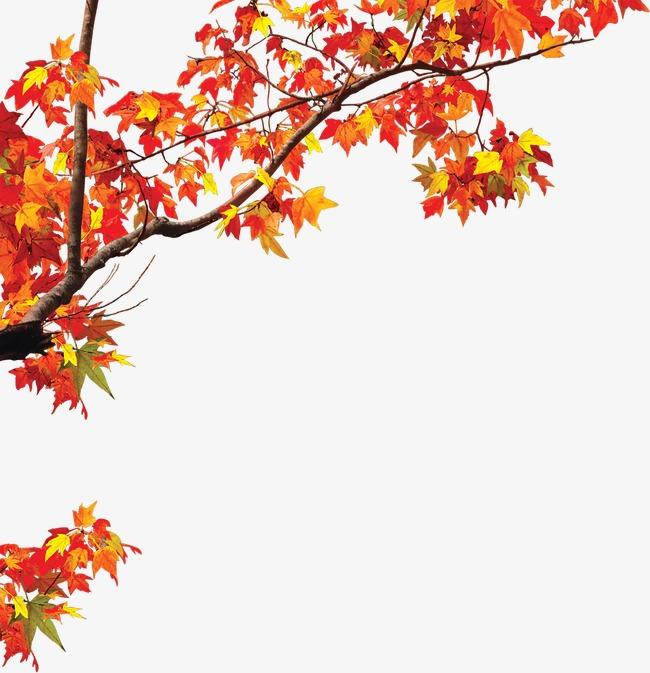手绘红黄色枫叶风景【高清装饰元素png素材】-90设计