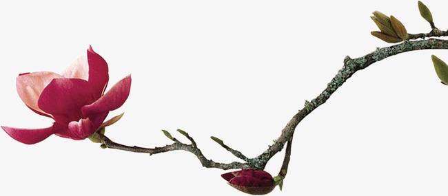 枝头一朵鲜花